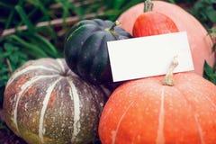 Generi differenti di zucche su un fondo dell'erba Harves di autunno fotografia stock