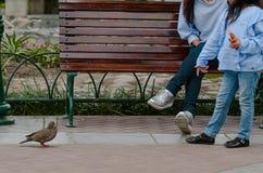 Generi e la sua piccola figlia che si siede su un banco che esamina un piccione immagini stock libere da diritti