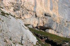 Generi ed il suo stambecco del bambino nelle montagne Immagine Stock