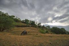 Generi il cavallo ed il puledro del bambino al campo verde Montagne dell'Azerbaigian caucaso Fotografie Stock Libere da Diritti