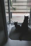 Generi il gatto ed il bambino che esaminano la finestra Fotografia Stock Libera da Diritti
