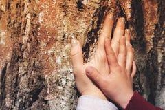 Generi il ` s e le mani del ` s del figlio posizionate sul vecchio albero Immagine Stock