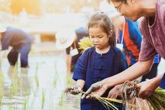 Generi l'agricoltore che insegna al suo bambino che pianta il riso nel giacimento del riso Immagini Stock Libere da Diritti
