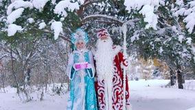 Generi la condizione nubile della neve e di Frost sotto l'albero innevato stock footage