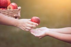 Generi la mano dell'agricoltore che dà una mela alla mano della ragazza del piccolo bambino Immagine Stock