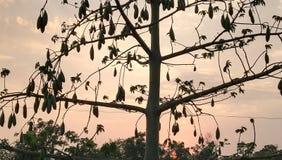 Generi uno di frutta, di frutta di stagione e di bello albero immagini stock libere da diritti