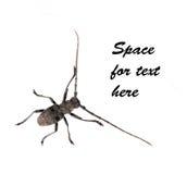 Generic bug or beetle - white background Royalty Free Stock Image