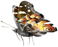 Generic Butterfly Illustration Royalty Free Stock Photo