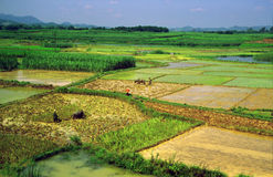 Generic chinese rice fields Stock Image