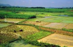 Generic chinese rice fields Stock Image