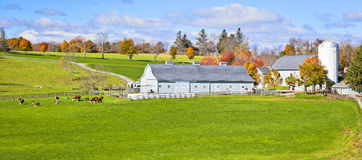 Generic Dairy farm. Generic looking colonial style dairy farm in New England, America Stock Image