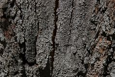 Generic, detailed close up of cracked tree bark stock images