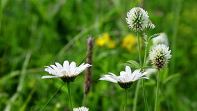 Generic field flowers background. Closeup of generic field flowers on a windy day stock footage