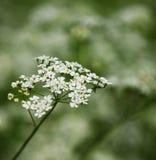 Generic Grass Bloom Stock Photos