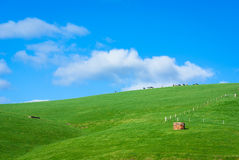 Generic green hilly farmland with dairy cows and blue sky Stock Photo