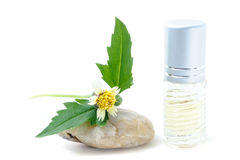 Generic Perfume and Sun Flower on stone, white background Royalty Free Stock Photography