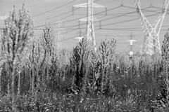 Generic vegetation Stock Photos