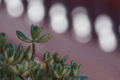 Generische cactus Royalty-vrije Stock Foto