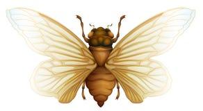 Generische cicadeillustratie Stock Fotografie
