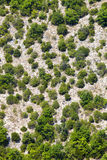 Generische Gebirgsvegetation Schattenbild des kauernden Geschäftsmannes Bäume und Gelände Lizenzfreie Stockbilder