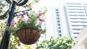 Generische purpurrote Hängepflanze in einem Park Stockbild