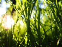 Generische vegetatie Royalty-vrije Stock Foto's
