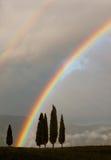 Generischer Hintergrund mit Zypressenbäumen und doppeltem Regenbogen Stockbilder