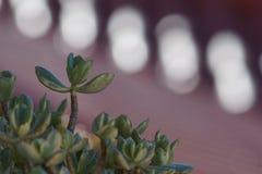 Generischer Kaktus Lizenzfreies Stockfoto