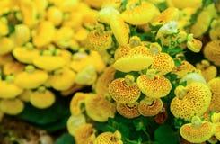 generisk vegetation Arkivfoton