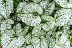 Generiska växter i trädgård Arkivfoton