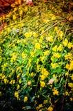 Generiska växter och blommor Arkivbilder