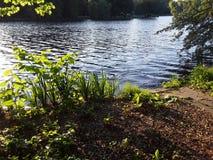 Generiska växter på Schlossteich sjön royaltyfria foton