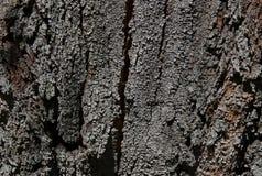Generiskt detaljerat slut upp av det spruckna trädskället arkivbilder