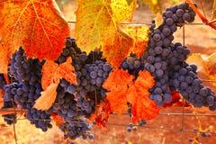 Generosidad del vino de la caída Imagen de archivo libre de regalías