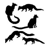 Genet set vector Stock Photo