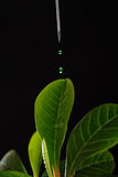 Genetic engineering Royalty Free Stock Photography