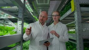 Genetic engineering. Doctors in white coats look and adjust the work of the vertical farm checking the plants and. Looking into the screens of tablets stock footage