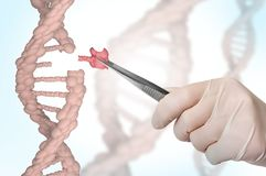 Genetic engineering and gene manipulation concept. Hand of scientist replacing DNA - genetic engineering and gene manipulation concept Stock Images