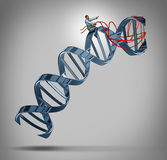 Genetic Engineering. And gene modification medical science concept as a doctor or researcher scientist guiding a DNA strand using a harness as a symbol of stock illustration