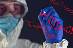 Genetic engineering and science, scientist working in laboratory. Genetic engineering and science, scientist wearing protective clothing working in laboratory royalty free stock photography