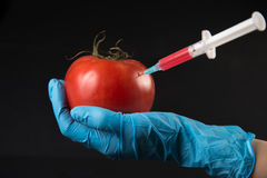 Genetic injection into tomato Royalty Free Stock Photography