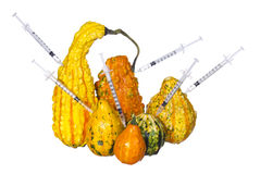 Genetic injections into pumpkins isolated. Genetically modified or unusually shaped squashes with syringes. Stock Image