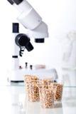 Genetic modification. Corn Hybrid Selection genetic biotechnology stock photo
