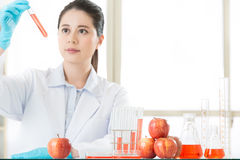 Genetic modification can be healthy or not Stock Photography