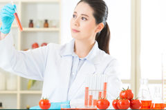 Genetic modification can be healthy or not Stock Images