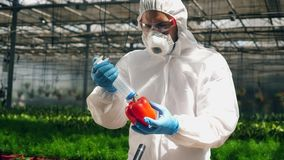 Genetic modification food concept. Male biologist uses a syringe while injecting one bell pepper.