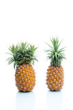 Genetic Modification, pineapple, fruit, modification, strange, s Royalty Free Stock Images