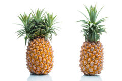 Genetic Modification, pineapple, fruit, modification, strange, s Stock Photography