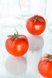 Genetic modification red tomato laboratory glassware on white Stock Photography