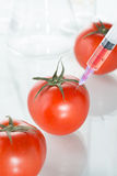 Genetic modification red tomato laboratory glassware on white Stock Photo